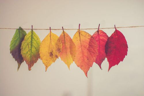 Image of leaves that are different colors hanging on a string